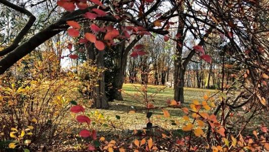 Podzimní park Střed